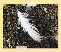 feather on rocks