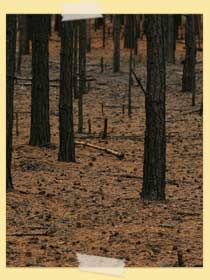 Image of burnt out forest