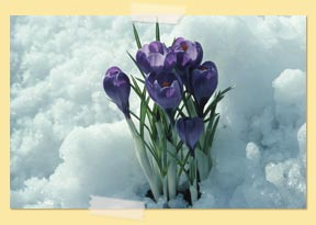 photo of snow and flowers